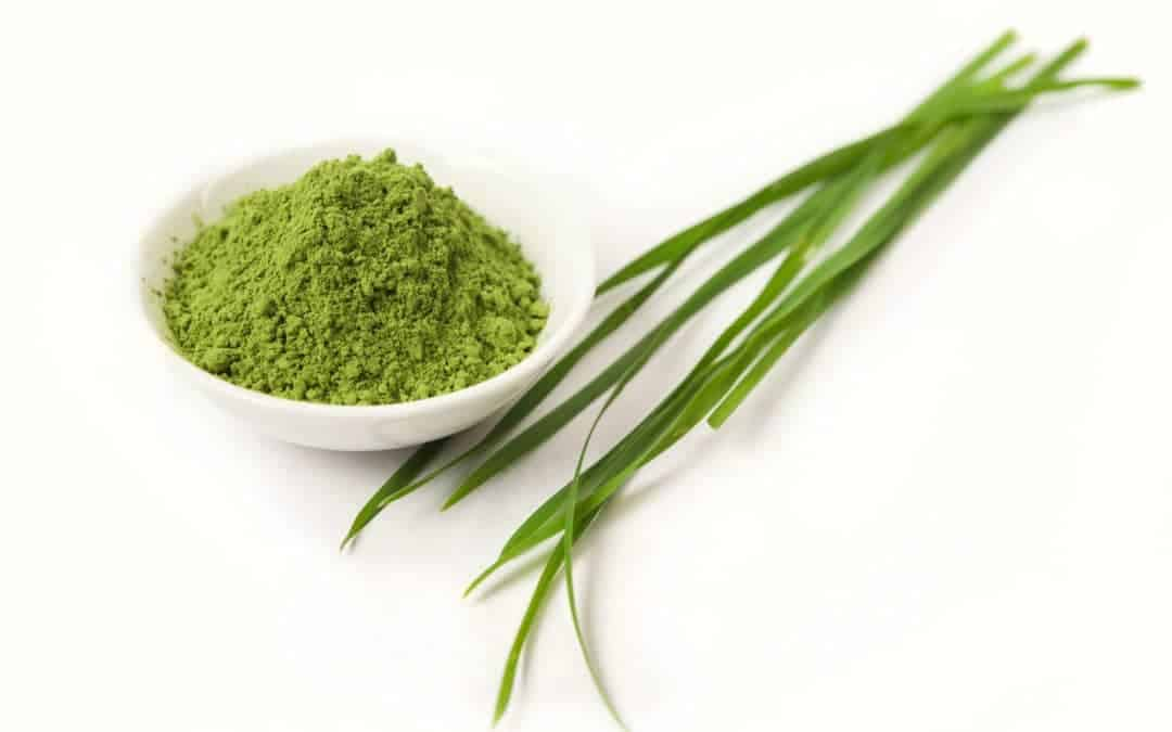 Gerstengrassaft: Mittel gegen Angst und Stress – für innere Ruhe