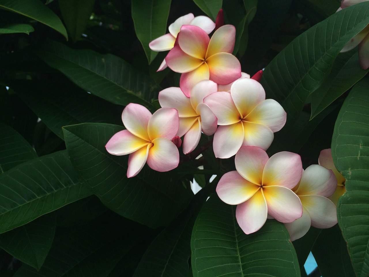 mit dem hawaiianischen vergebungsritual Ho'oponopono verzeihen lernen