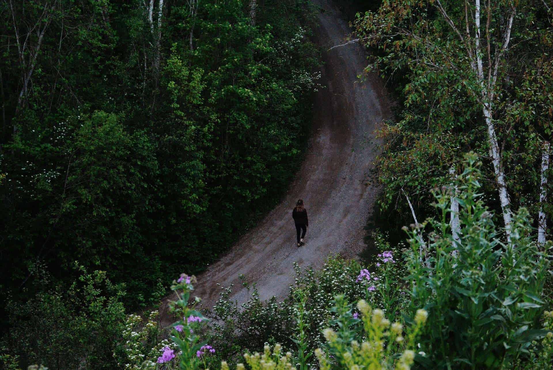 wie uns die natur und bäume heilen können