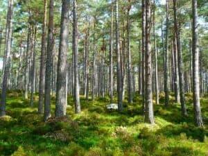 bäume wirken erholsam und entspannend auf unsere psyche