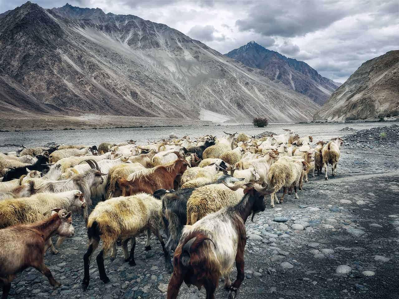 Gott der Hirten und Herden Pan und was Panikattacken mit Pan zu tun haben