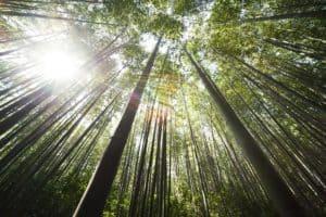 die besten tipps gegen Stress: raus in die natur