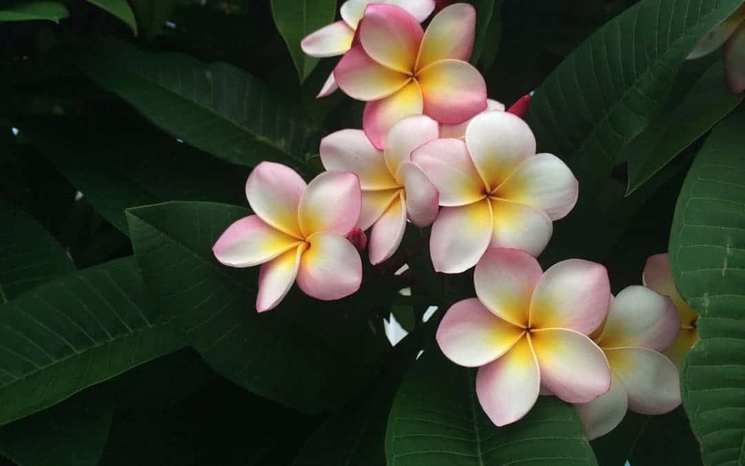 Verzeihen lernen mit dem hawaiianischen Vergebungsritual Ho'oponopono