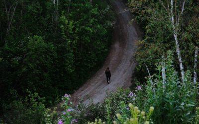 Die heilende Wirkung der Natur: Wie Bäume uns gesünder machen