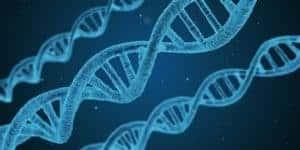 DNA wird bei Achtsamkeitsübungen positiv verändert