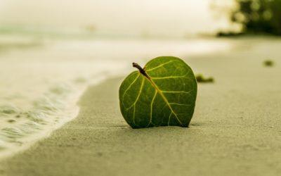 Work-Life-Balance: Wie ein Gleichgewicht zwischen Beruf & Leben gelingt