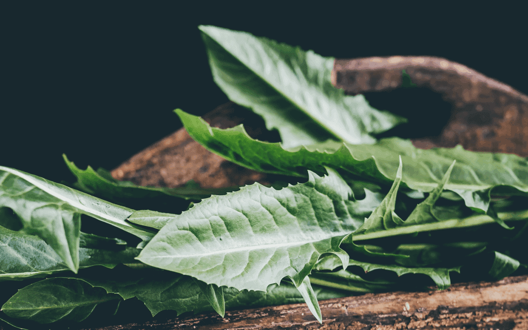 Mutti Natur #1: Die Heilpflanze Löwenzahn & ihre Anti-Wut-Wirkung