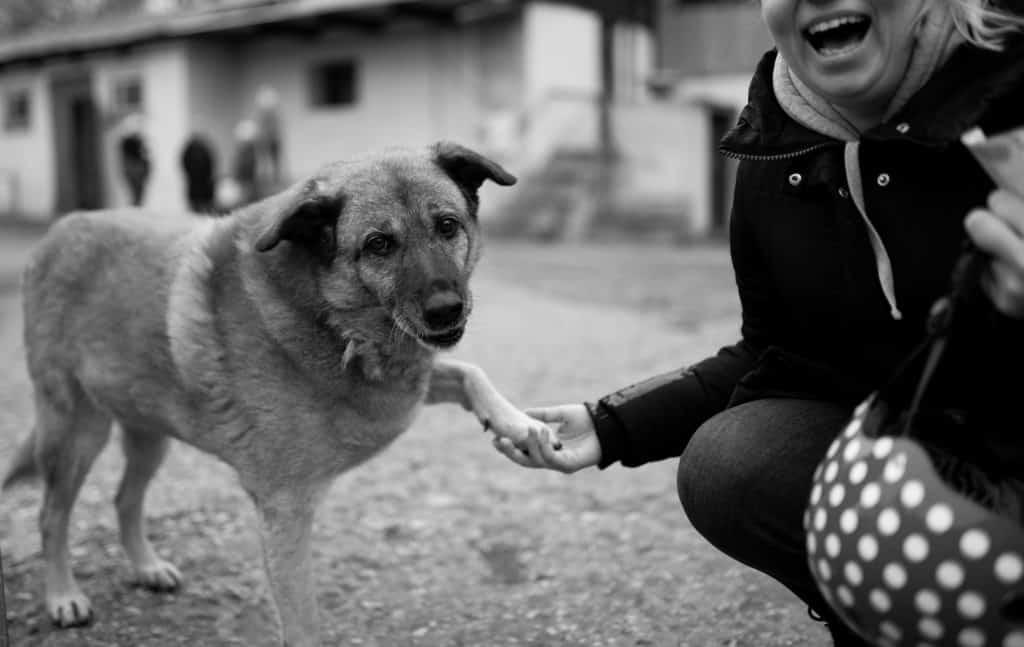 ob Therapietier oder Haustier: Tiere helfen uns von innen heraus zu heilen