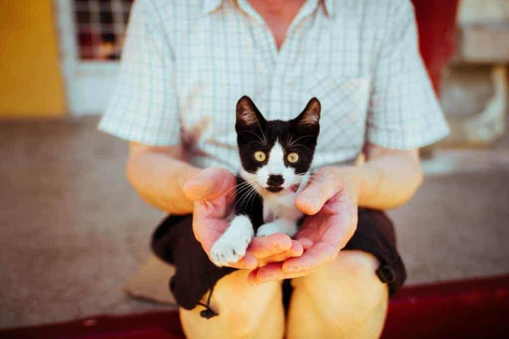 sich ein Haustier zulegen gegen Angst, Einsamkeit und Depressionen?