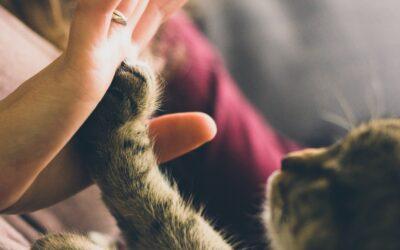 Von Menschen, die mit Tieren leben, oder die Tiere sogar mehr lieben als Menschen
